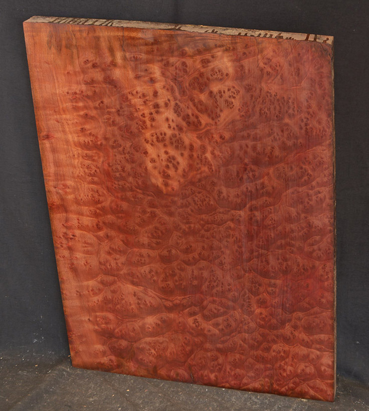 A slab of Camphor burl that has been sanded and shellacked.